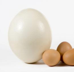 uovo di struzzo | carnedistruzzo.it